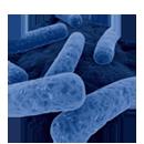 Gestione dell'infezione da C. difficile